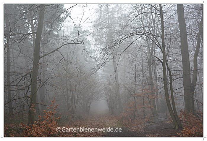 Nebelschleier