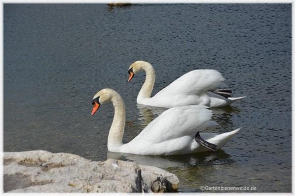Gänsepaar