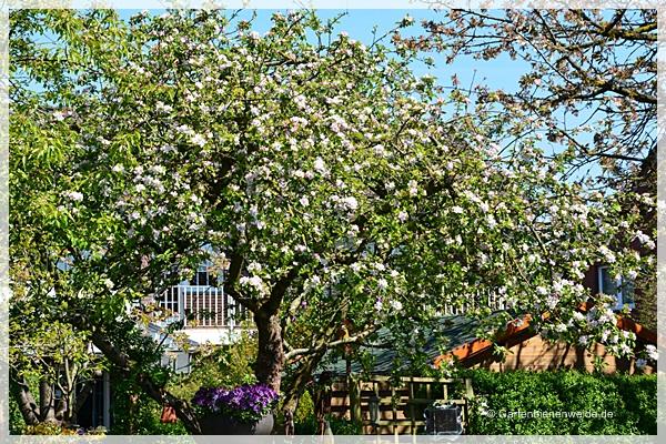 Apfelbaun