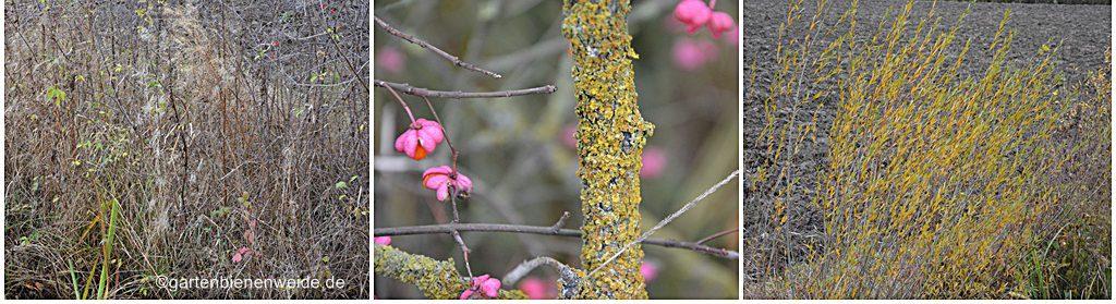Gartenbienenweide