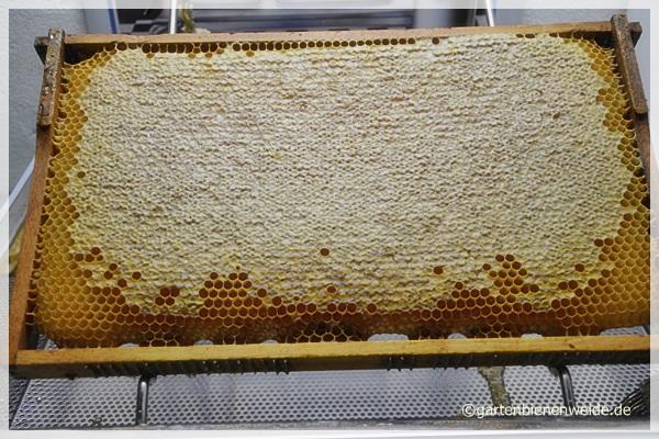 Bienenjuli