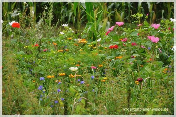 Bunter Blumenstreifen