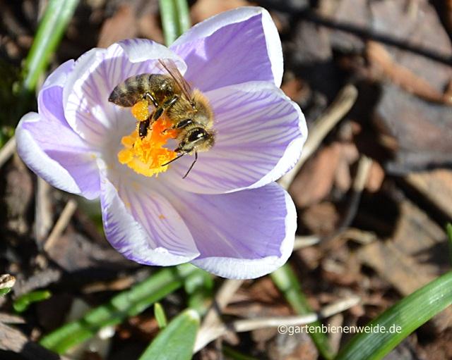 Biene unterwegs