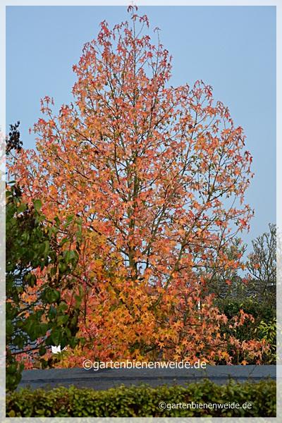 Nachbars Baum